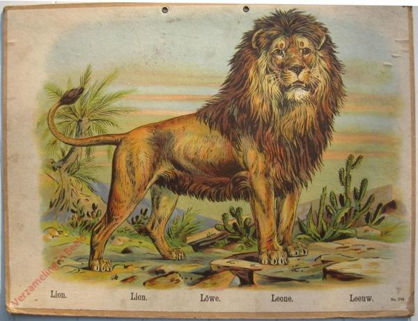 748 - Lion, Lion, Lowe, Leone, Leeuw